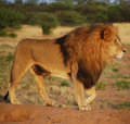Safari-Bilder
