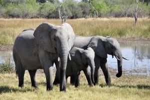 Drei Elefanten an einem Wasserloch...