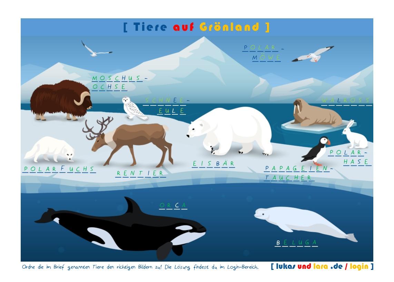 Aktionskarte Groenland mit Loesung
